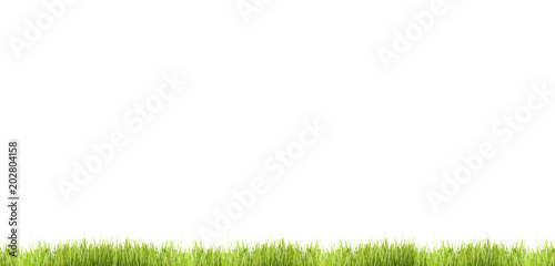 green grass meadow blades of grass isolated lawn 3d illustration