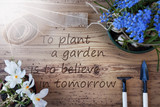 Sunny Spring Flowers, Quote Plant A Garden Believe In Tomorrow - 202814514