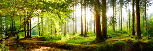Foto Murales Beautiful forest in spring with bright sun shining through the trees