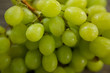 Green bunch of grapes with water droplets