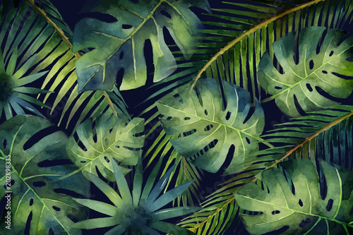 Watercolor vector banner tropical leaves and branches isolated on dark background. - 202898335
