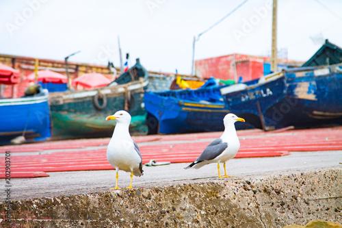 Plexiglas Marokko Gulls on the background of fishing boats. Africa. Morocco. Agadir.