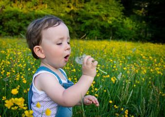 Zweijährige mit Pusteblume in der Frühlingswiese