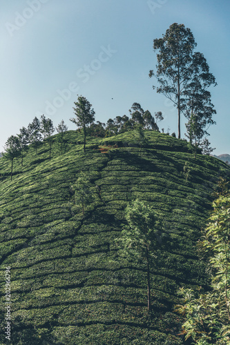 Aluminium Khaki Teeplantage Fairtrade anbau, Bio Gesund aus der Natur Tee