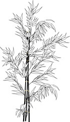 outline of black bamboo branches bunch isolated on white