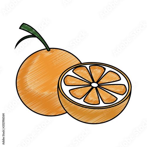 Orange half cut vector illustration graphic design