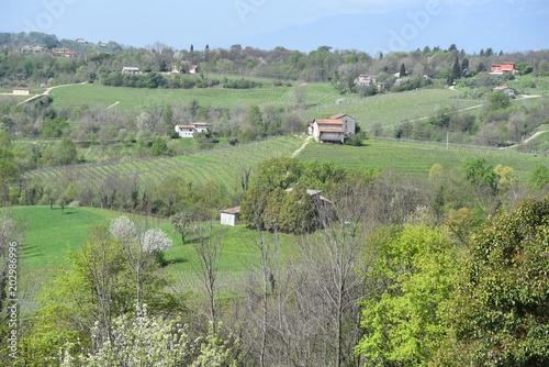 Plexiglas Olijf Conegliano, Treviso, Veneto, Italia, vigne er la produzione del vino prosecco