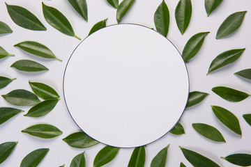 Leaves on white  background. with space for text