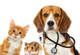 dog veterinarian and cat - 203082527