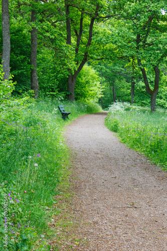Fotobehang Groene Footpath in summer woods