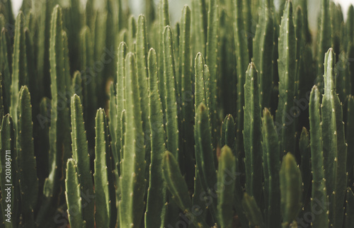 green cactus background mexican plant fashion