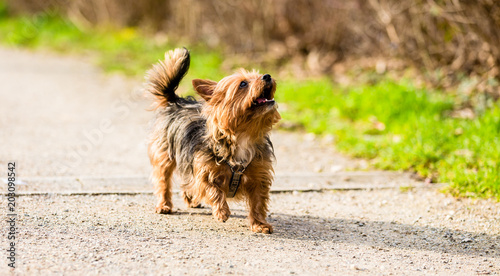 Fototapeta Cute little dog on forest path for walk