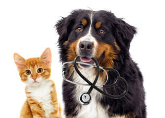 dog veterinarian and cat
