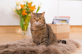 Katze sitzt auf einem Fell am Boden