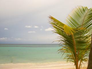 Panorama of coconut palms on a tropical sandy beach