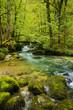 Rivière en forêt