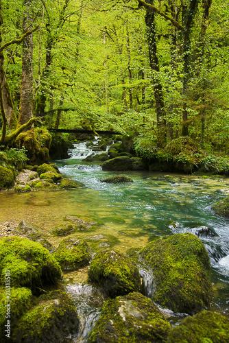 Fototapeta Rivière en forêt