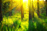 Spring nature scene. Beautiful landscape. Park with green grass and trees - 203146107
