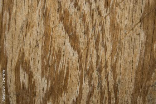 Canvas Koffiebonen madera