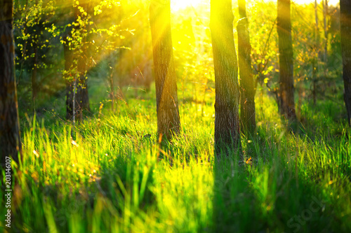 Spring nature scene. Beautiful landscape. Park with green grass and trees