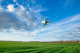 Flying drone above the wheat field - 203162107
