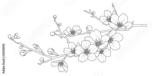 Cute hand drawn isolated sakura branch set 1. - 203181115