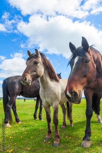 Pferde auf einer Weide, artgerechte Haltung in der Landwirtschaft