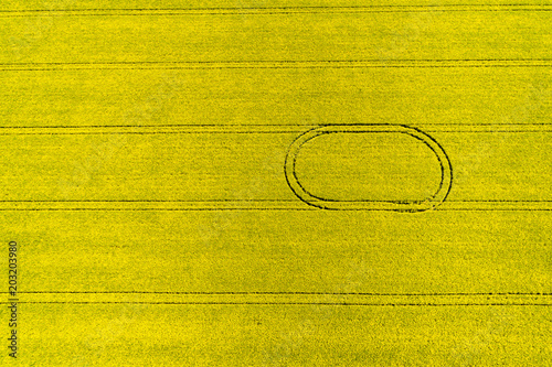 Fotobehang Oranje Aerial top view of rapeseed flower field in spring with combine tracks and agricultural countryside road