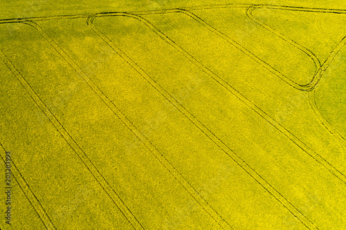 Plexiglas Honing Aerial top view of rapeseed flower field in spring with combine tracks and agricultural countryside road