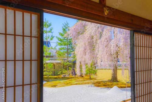 Fotobehang Zen 高台寺 桜の風景
