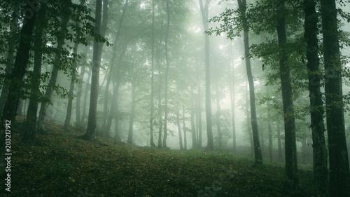 Plexiglas Olijf green misty woods, natural landscape