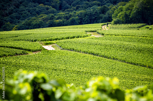 Fotobehang Wijngaard Champagne, Reims. Montagne de Reims. Hills covered with vineyards. France