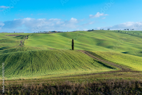 Fotobehang Toscane Green rolling hills near San Quirico d'Orcia, Tuscany, Italy
