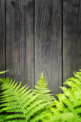 Fern leaves on wooden background