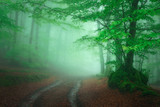 path in foggy forest at spring