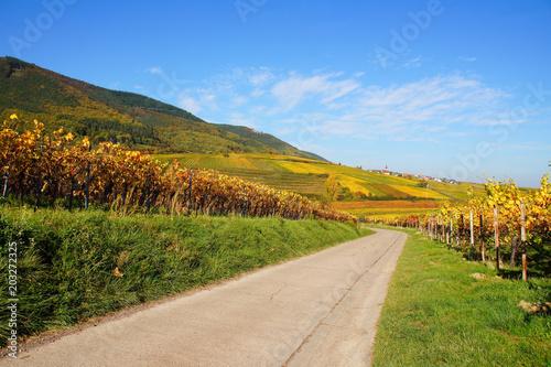 Fotobehang Wijngaard bunte Weinberge und Weg im Herbst an der Südlichen Weinstrasse