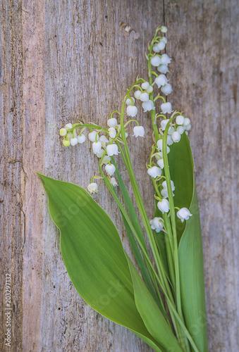 Plexiglas Lelietjes van dalen Bit of lilies of the valley on tree stump, selective focus,vertical picture