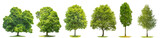 Collection trees maple oak birch chestnut Isolated nature objects - 203304945