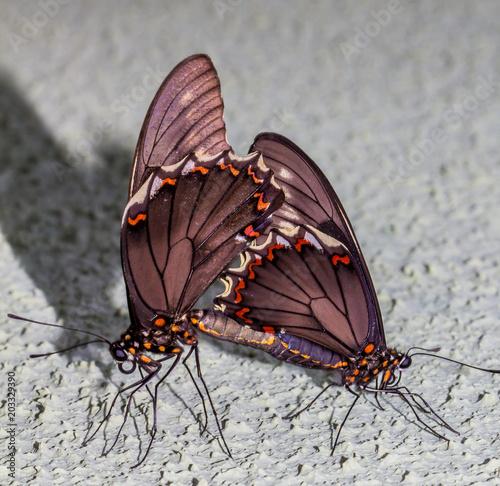 Plexiglas Vlinder Mundo Macro borboletas
