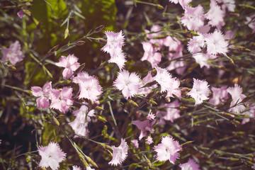 природа ранней весной фоновое изображение