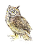 Sketch, drawing owl, watercolor - 203354368
