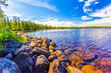 Forest river shore landscape