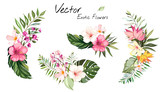 set Tropical vector flowers. card with floral illustration. Bouquet of flowers with exotic Leaf isolated on white background. composition for invitation to party or holiday - 203373726