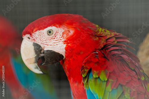 Aluminium Papegaai parrot, bird, macaw