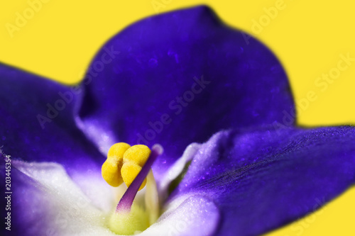 Young flower violet, nature, cleanliness, hygiene, youth, perfume, smell, beauty, purple, background, intimate area, isolate - 203445354
