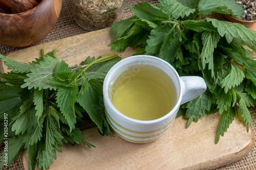 Filiżanka pokrzywowa herbata z świeżą rośliną