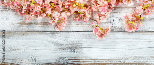 Plexiglas Kersen Blooming cherry blossom flowers on white vintage wood in overhead view for spring concept