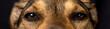 Mixed breed dog looking suspiciously