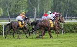 Fototapeta Horses - wyścigi konne © mbanaszk