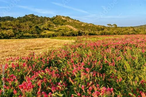 Plexiglas Honing mercadal countryside, menorca, balearic islands, spain